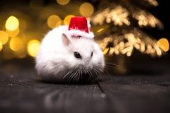 与圣诞老人帽子的逗人喜爱的仓鼠在与圣诞灯的bsckground 图库摄影