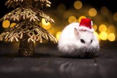 与圣诞老人帽子的逗人喜爱的仓鼠在与圣诞灯的bsckground 库存照片