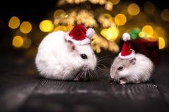 与圣诞老人帽子的逗人喜爱的仓鼠在与圣诞灯的bsckground 库存图片