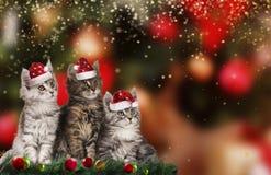 与圣诞老人帽子的逗人喜爱的圣诞节小猫 库存图片