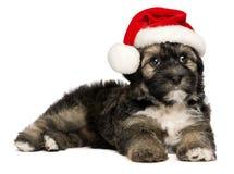 与圣诞老人帽子的逗人喜爱的圣诞节Havanese小狗 免版税库存照片
