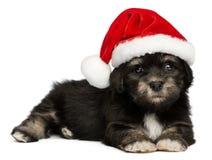 与圣诞老人帽子的逗人喜爱的圣诞节Havanese小狗 免版税图库摄影