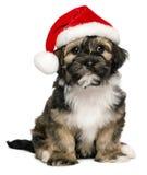 与圣诞老人帽子的逗人喜爱的圣诞节Havanese小狗 库存图片