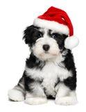 与圣诞老人帽子的逗人喜爱的圣诞节Havanese小狗 库存照片