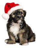 与圣诞老人帽子的逗人喜爱的圣诞节Havanese小狗 图库摄影