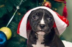 与圣诞老人帽子的逗人喜爱的小狗在被弄脏的圣诞树backgrou 免版税库存图片