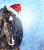 与圣诞老人帽子的马在showfall,圣诞节背景 免版税图库摄影