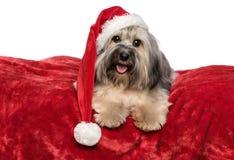 与圣诞老人帽子的滑稽的圣诞节狗在一条红色毯子说谎 免版税图库摄影