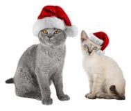与圣诞老人帽子的Xmas猫 图库摄影