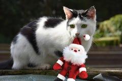 与圣诞老人的猫 库存图片