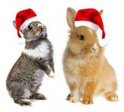 与圣诞老人盖帽的小的兔子 库存照片