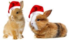 与圣诞老人盖帽的小的兔子 库存图片