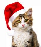 与圣诞老人盖帽的猫 免版税库存图片