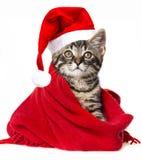 与圣诞老人盖帽的猫 库存图片