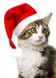 与圣诞老人盖帽的猫 免版税库存照片