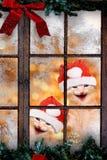 与圣诞老人盖帽笑的两只猫 免版税库存图片