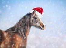 与圣诞节圣诞老人帽子的阿拉伯马在蓝色冬天雪 免版税库存照片