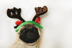 与圣诞节垫铁的哈巴狗在白色 库存图片