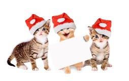 与圣诞节帽子和横幅的三只幼小猫 免版税库存图片