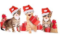 与圣诞节帽子和礼物的幼小小猫 免版税库存图片