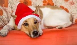 与圣诞节帽子的逗人喜爱的狗 库存图片