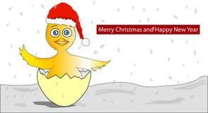 与圣诞节摇篮帽子的小鸡 免版税图库摄影