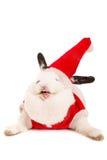 与圣诞节服装的兔子 免版税库存图片