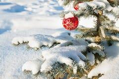 与圣诞节杉树装饰红色球的冬天风景和 免版税图库摄影