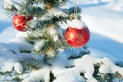 与圣诞节杉树装饰红色球的冬天风景和 免版税库存照片