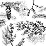 与圣诞节植物的传染媒介背景 免版税图库摄影