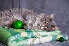 与圣诞节球和小珠的逗人喜爱的毛茸的家庭猫在绿色plai 库存照片