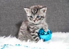与圣诞节球的一只小猫 小猫和新年 库存照片
