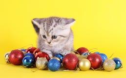 与圣诞节球的小猫 免版税图库摄影