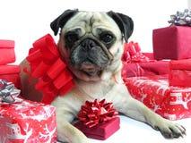 与圣诞节礼品的逗人喜爱的狗 免版税库存图片