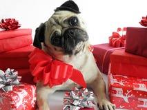 与圣诞节礼品的逗人喜爱的狗 免版税图库摄影