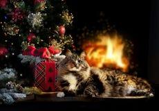 与圣诞节礼物、树&火的猫 免版税库存照片