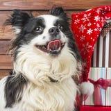 与圣诞节礼物的愉快的小狗 免版税库存照片
