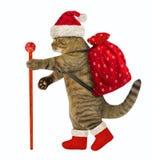 与圣诞节礼物的猫 免版税库存照片
