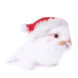 与圣诞节红色帽子的白色小兔 免版税库存照片