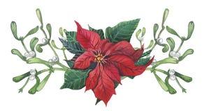 与圣诞节花卉装饰的水彩一品红 手画传统花和植物:霍莉、槲寄生、莓果和冷杉 库存例证