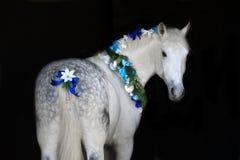 与圣诞节花圈的马 免版税库存照片