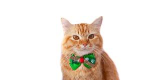与圣诞节蝶形领结的黄色猫 库存照片