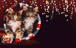 与圣诞节装饰一起的两只逗人喜爱的小猫 黑色背景 图库摄影