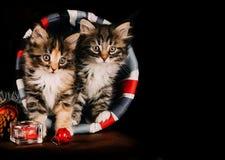 与圣诞节装饰一起的两只逗人喜爱的小猫 黑色背景 免版税库存图片