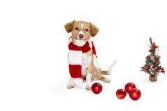 与圣诞节装饰品的狗 免版税库存图片