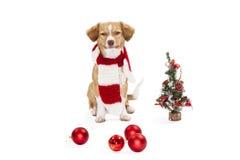与圣诞节装饰品的逗人喜爱的狗 免版税库存照片