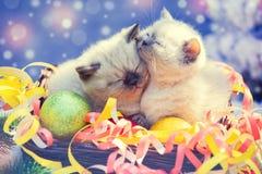 与圣诞节装饰的两只小的小猫 图库摄影
