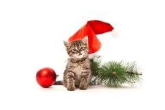 与圣诞节装饰的咧嘴笑的小猫 免版税库存图片