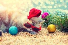 与圣诞节装饰的猫在海滩放置在杉树附近 免版税库存图片