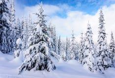 与圣诞节装饰的积雪的树在冬天风景 库存照片